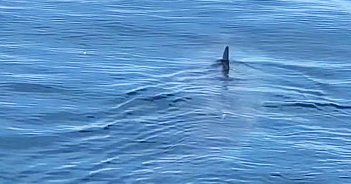 【鳥肌】遠くに見えた背ビレ。小さく見えたものの、接近してくると潜水艦のような巨大なサメだった!