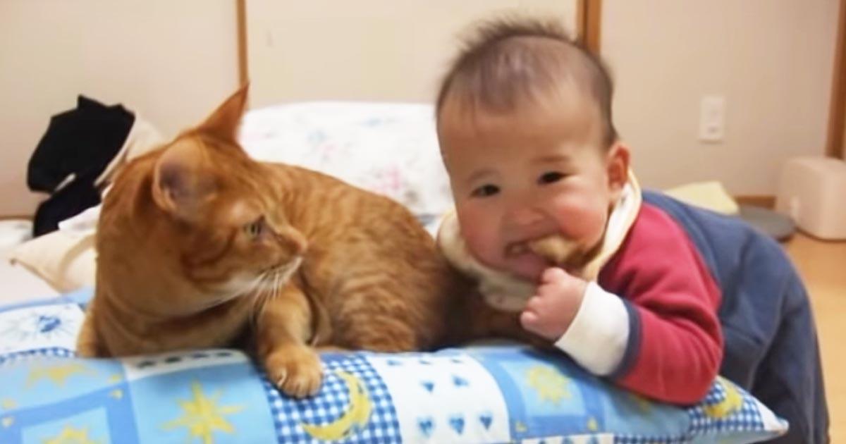 赤ちゃんに尻尾を噛まれた猫。怒るかと思いきや、優しい反応が返ってきた!