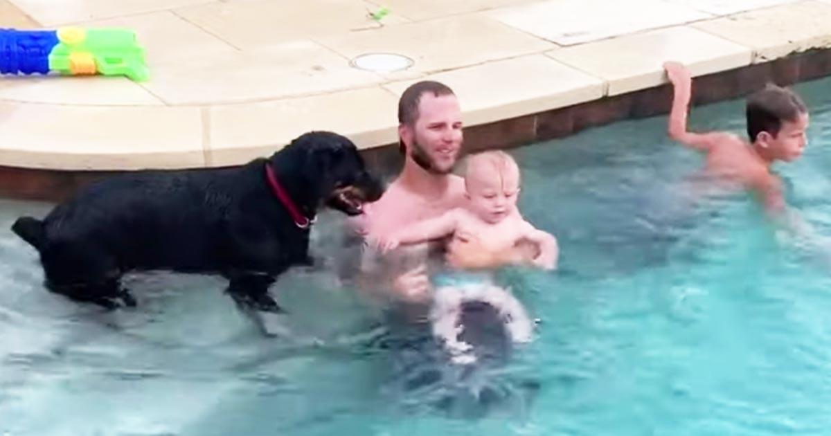 「最高のライフガードだ!」赤ちゃんをプールの深いところに行かせないために取った犬の行動が愛らしいと話題に!
