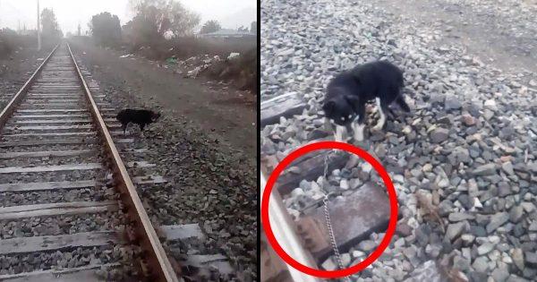 機関車を緊急停車した運転士、線路に繋がれた子犬を救助し話題に!