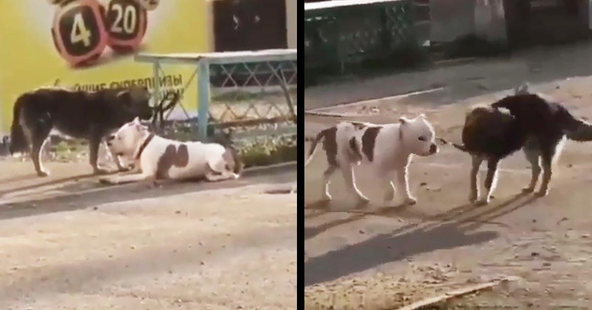 「今から君は自由だ!」賢い野良犬が繋がれていた飼い犬を解放してあげる姿が話題に!