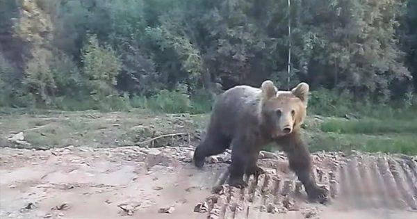 ドライブ中に熊を発見!「車の中だから大丈夫」とナメていたらめちゃめちゃビビらされた!