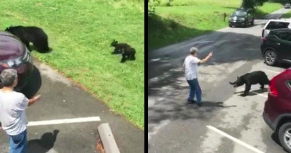 熊の母子に接近しすぎた男性に、子熊を守ろうとした母熊が突進!熊を守ろうとした男性の行為が裏目に出る!