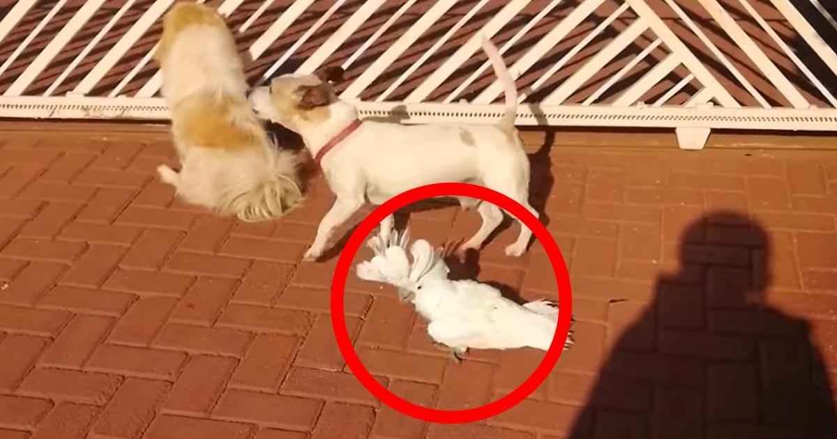 「なんて品種の犬?」犬と一緒に育ち自分のことを犬だと思ってしまったオウム。犬の声で鳴くようになり話題に!