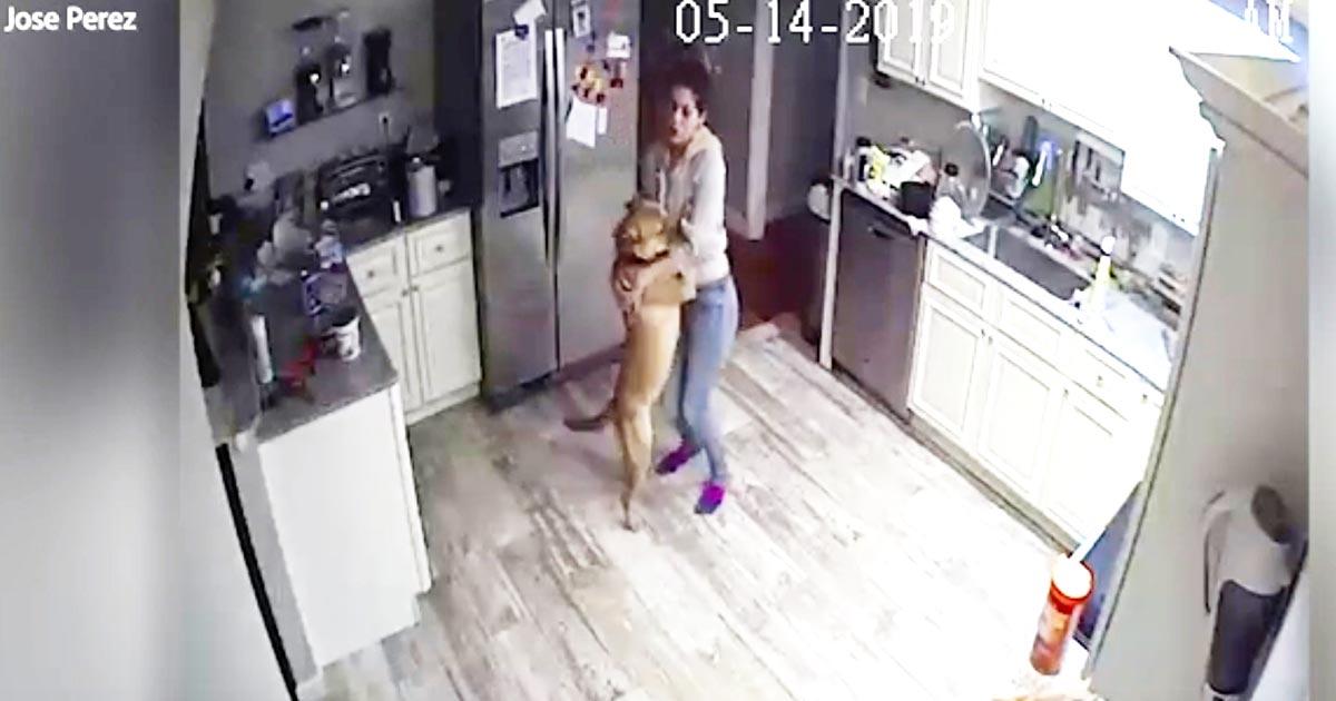 出張中犬が心配で遠隔カメラを仕掛けた男性。「侵入者通知」で慌てて見ると、ガールフレンドと犬がしていたことが可愛すぎて話題に!