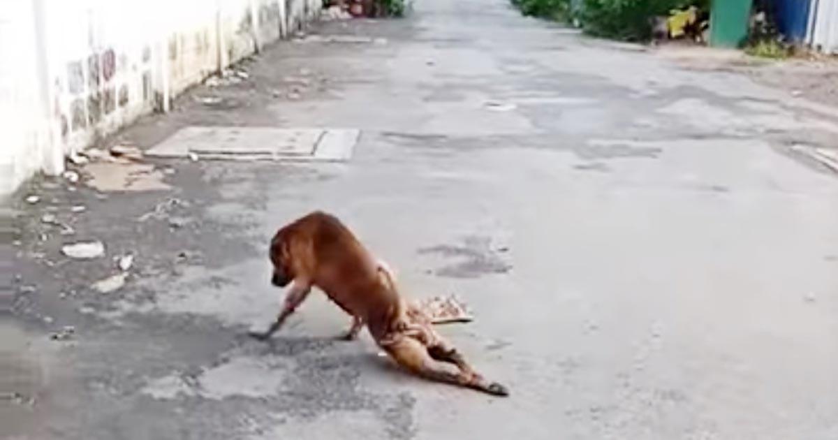 「詐欺犬!」足を引きずる可哀想な犬、、と思ったら完全に演技だった!