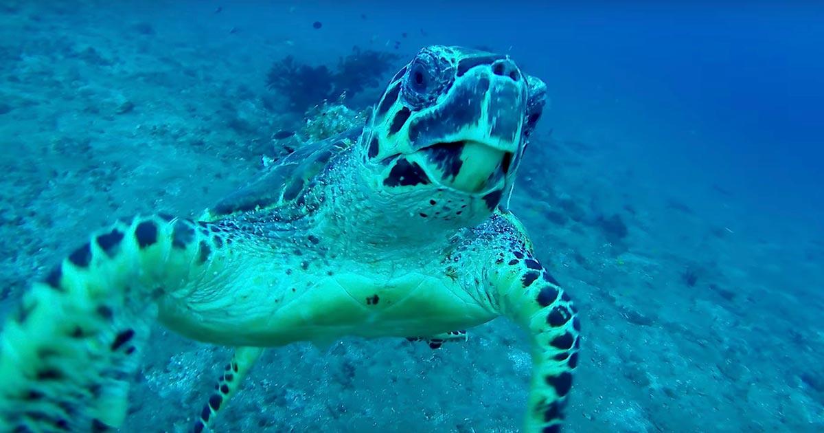 「助けてくれませんか?」ダイビングしていたら遠くからウミガメが近づいてきて助けを求めてきた!
