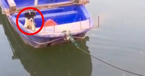 ボートに取り残された犬を救助する親友犬が賢すぎる!