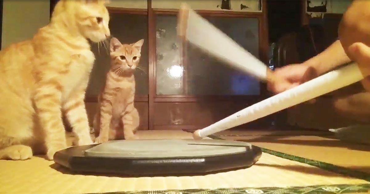 「可愛すぎる!」家でドラム練習をしたくない理由に思わず爆笑したと話題に!
