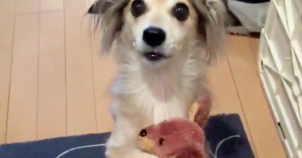 「こんな可愛いことされたら外出やめる」飼い主さんが外出しようとした時の犬の反応が可愛すぎると話題に!