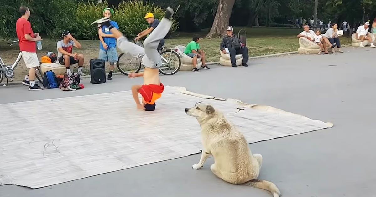 ブレイクダンスをするダンサーの真似をする犬が可愛すぎると話題に!