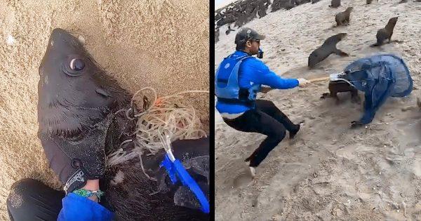 こんなにも助けを必要とするアザラシは多い。アザラシを釣り糸や漁網から助け続ける男性の記録動画が話題に!