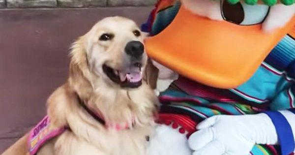 ディズニーランドに来た介助犬。大好きなドナルドダックに会った時の反応が可愛すぎると話題に!