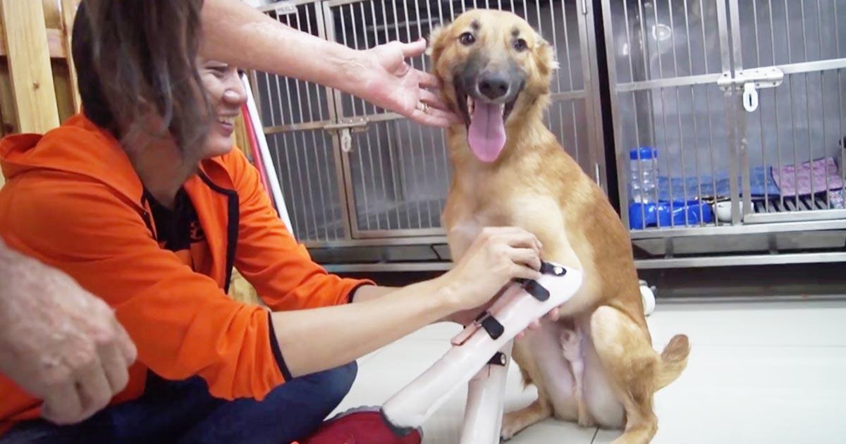心無い人間の行いで両前足を失ってしまった犬。義足をもらい歩けるようになり、全身で喜びを表現する姿に涙