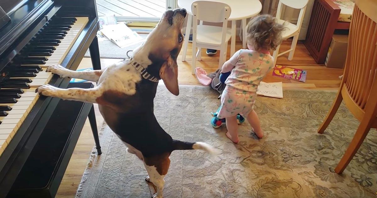 ナイスコンビ!ピアノ弾き語りをする犬に合わせて踊る赤ちゃんが可愛すぎる!