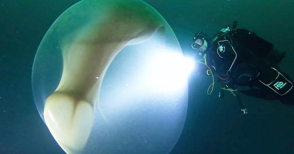 【神秘】ノルウェーで難破船を探索していた調査隊が生物の「巨大すぎる卵」を発見し話題に!