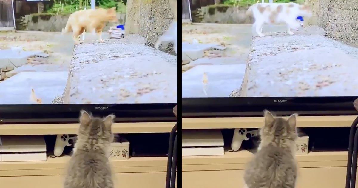 「超絶可愛い」猫の番組を見ていた子猫が可愛すぎる行動に出て話題に!