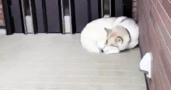 3日ぶりに帰宅したら、飼い主さんのことを忘れていた犬の反応が可愛すぎると話題に!