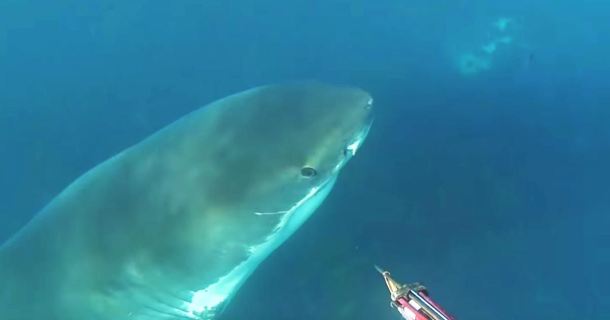 「リアルジョーズだ」船から300メートル離れた場所で大きなホオジロザメに狙われてしまったダイバーの緊迫の動画が話題に!
