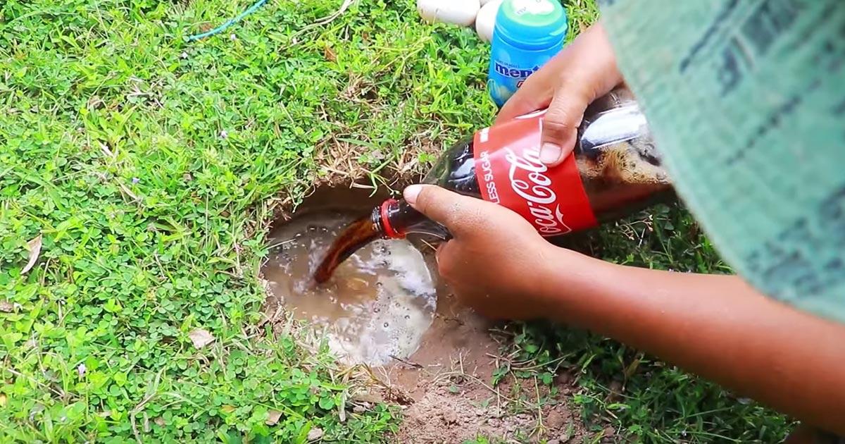 今度は地面の穴にメントスコーラで巨大魚をゲットしてしまう動画が話題に!