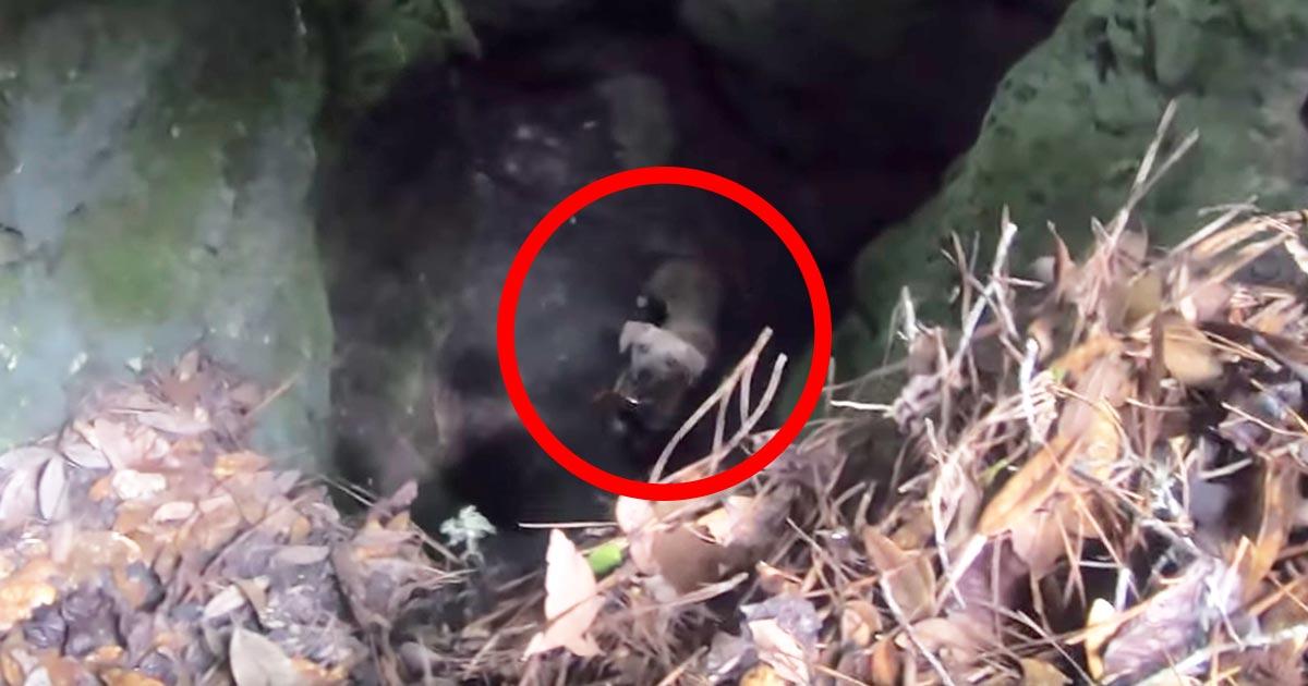 樹海を散策中に洞窟の奥から犬の鳴き声が!中を覗くとつぶらな瞳でこちらを見つめる犬がいた!