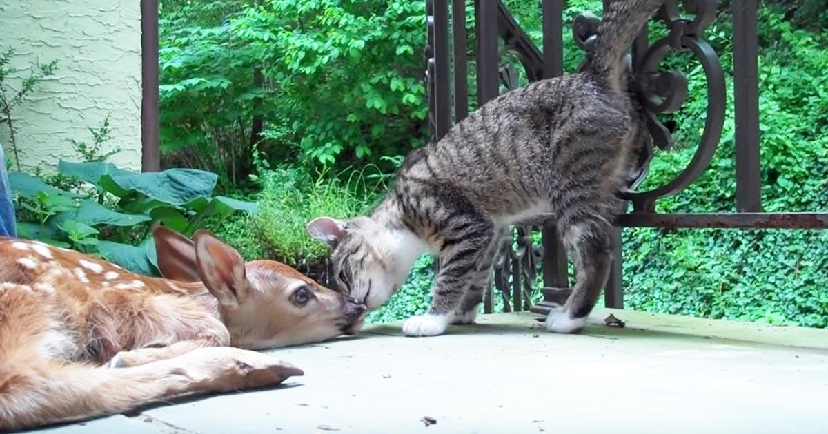 庭に迷い込んだ生まれたばかりで歩けない野生の子鹿。その様子を見た子猫の行動が可愛すぎる!