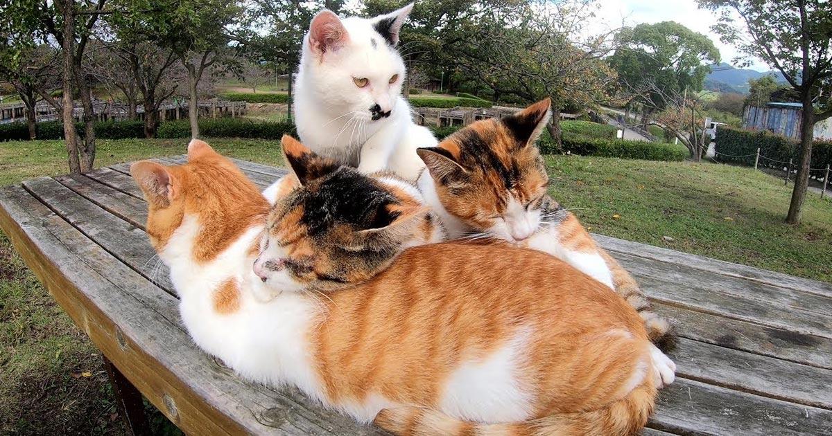 風邪をひいてしまい元気のない三毛猫に寄り添い、みんなで温めてあげる優しい仲間たちの姿に感動!