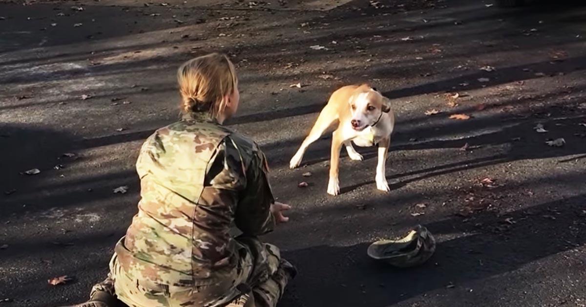 3年間の兵役中ずっと愛犬のことを考えていた女性。しかし再会した愛犬はしばらく女性のことに気づかなかった