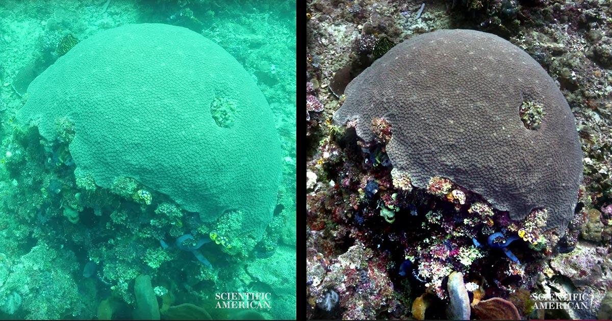 水中写真の「水中感」を消し去り、本当の色を再現するアルゴリズムが開発され凄いと話題に!