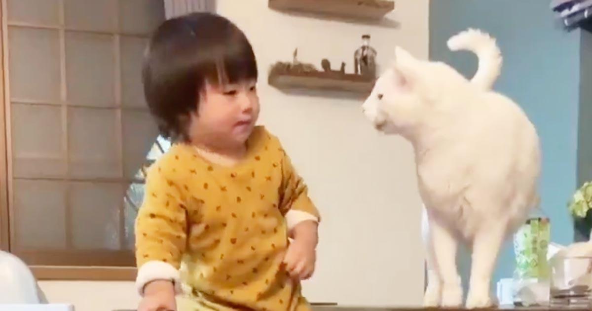「プロのベビーシッター」子供が危ないことをしそうになると優しく止めてくれる面倒見の良すぎる猫が話題に!