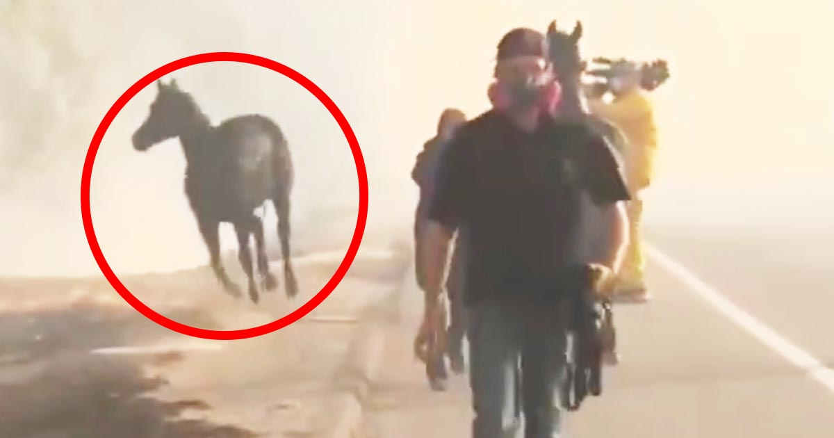 【神対応】「涙が出る」「まさにヒーローだ!」カリフォルニアの森林火災で、一度は避難したのに逃げ遅れた仲間のために一頭の馬が取った行動が話題に!