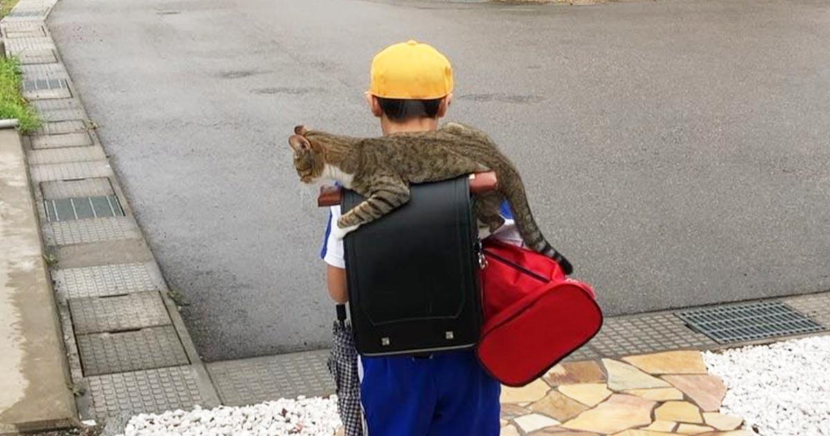 毎日ランドセルに乗って登校する少年をお見送りする猫が可愛すぎると話題に!