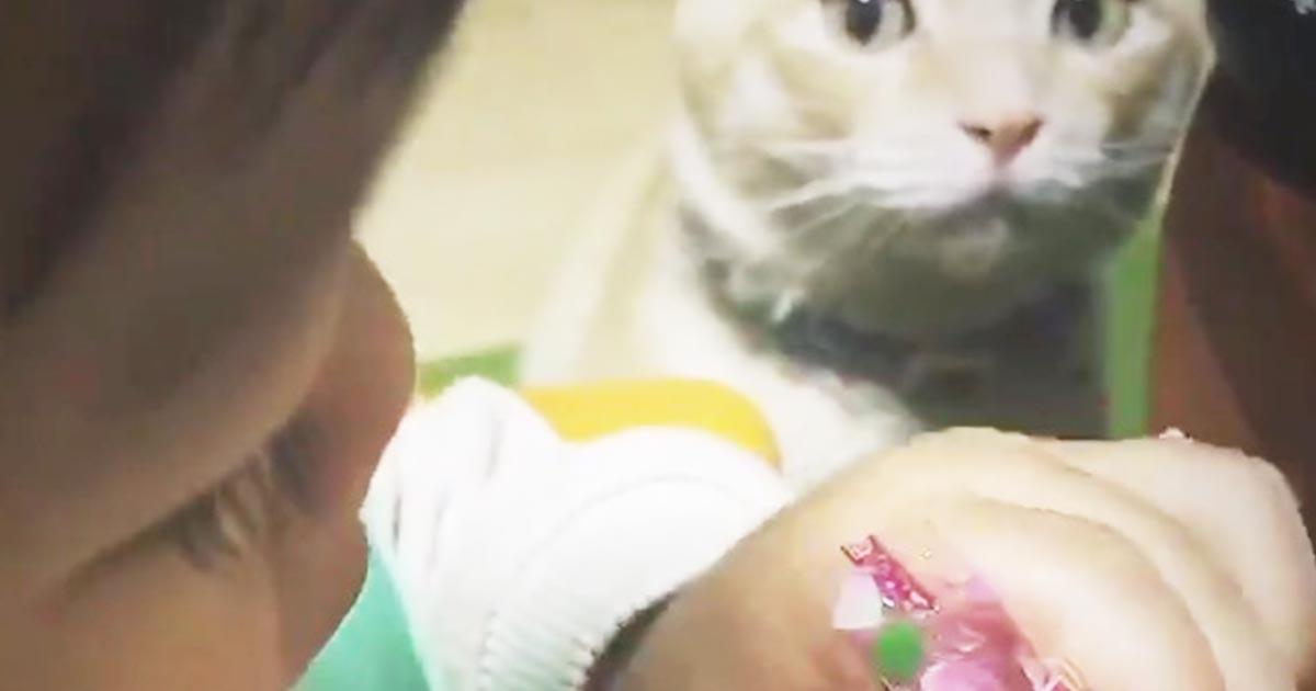 娘が食べているただのゼリーを「ちゅ〜る」だと思っている猫が可愛すぎると話題に!