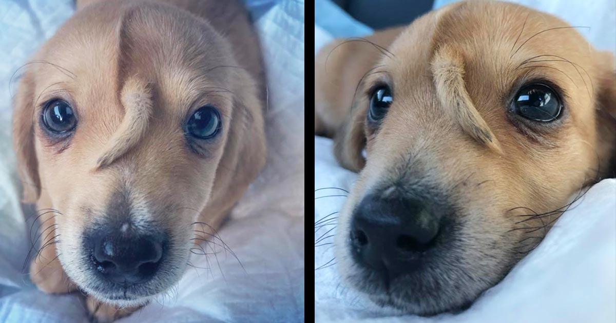 額からシッポの生えた「ユニコーン犬」が捨てられているところを救助され話題に!元気いっぱいの姿に癒される!