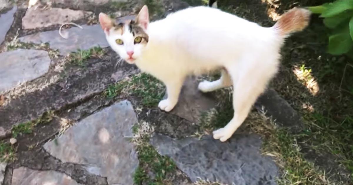 足を引きずりながら庭にやってきた猫。後をついて行ったらびっくりする光景があった!