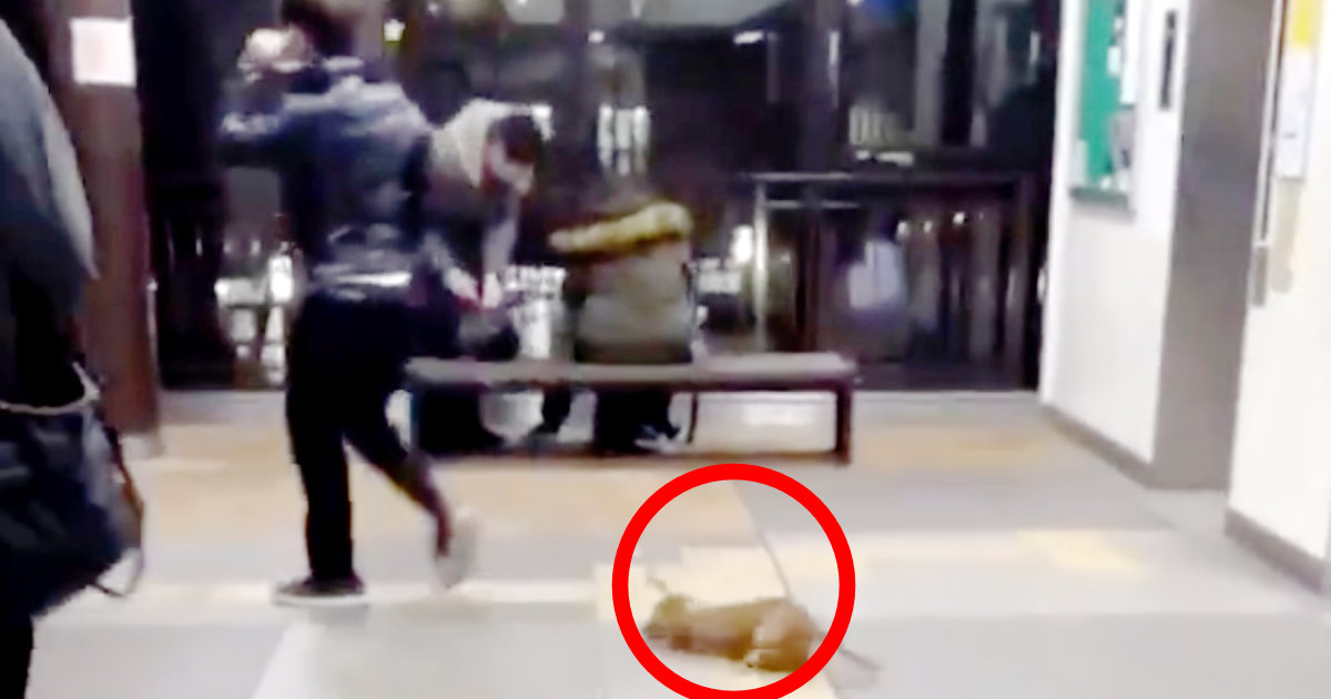 【兵庫】駅で目撃された犬の飼い主の行動が物議!「このまま階段降りてった」「この子助ける為に皆協力して欲しい」