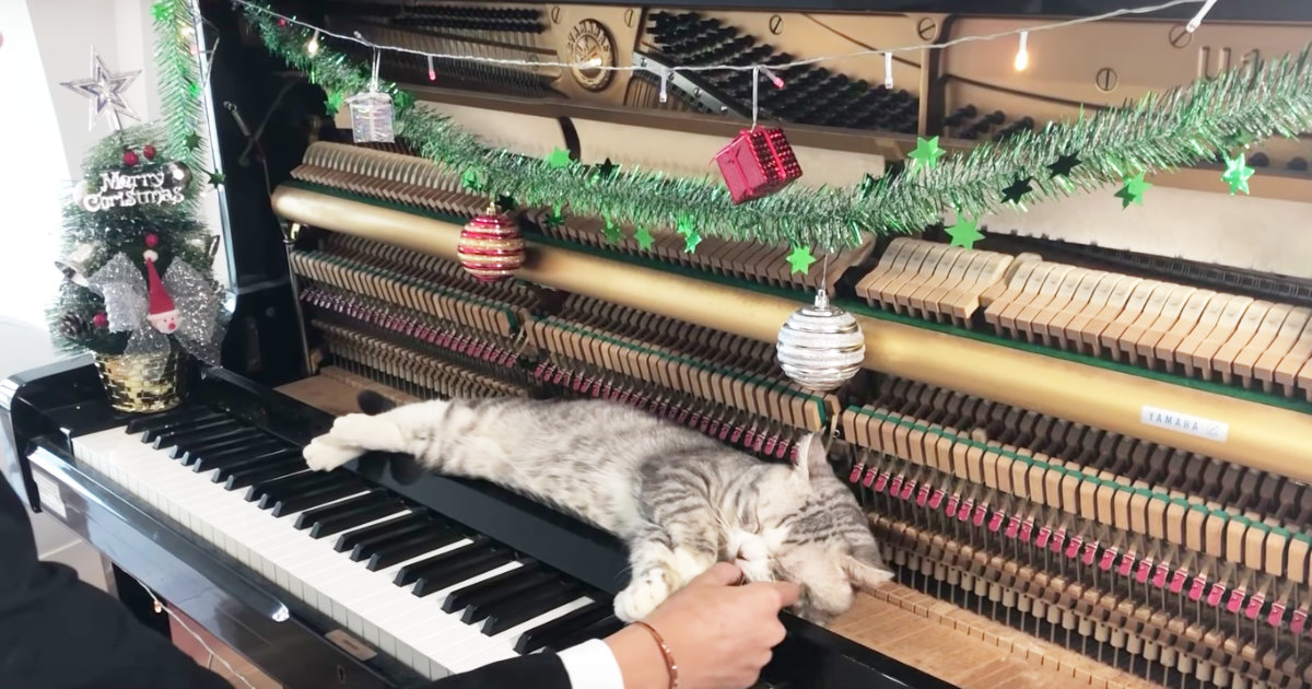 「マッサージにちょうど良いニャ」開いたピアノの上でクリスマスソングを気持ちよさそうに堪能する猫が可愛いと話題に!