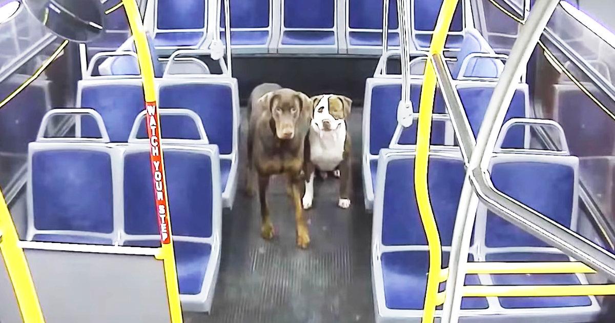 「クリスマスの奇跡」極寒の夜、震える2匹の迷い犬をバスに招き入れ助けたバス運転手が話題に!