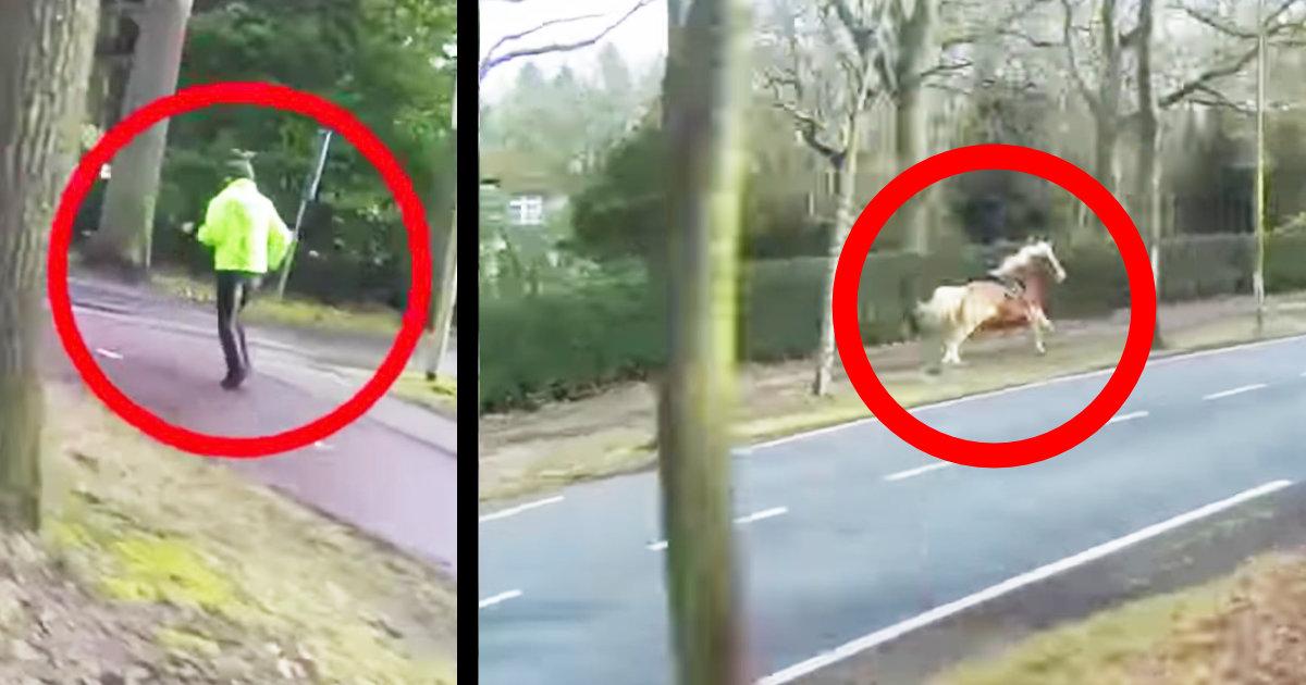 【神対応】脱走した馬を見つけたバイク運転手の行動がカッコ良すぎ!アクセルを吹かして窮地を救うために全力で走る!