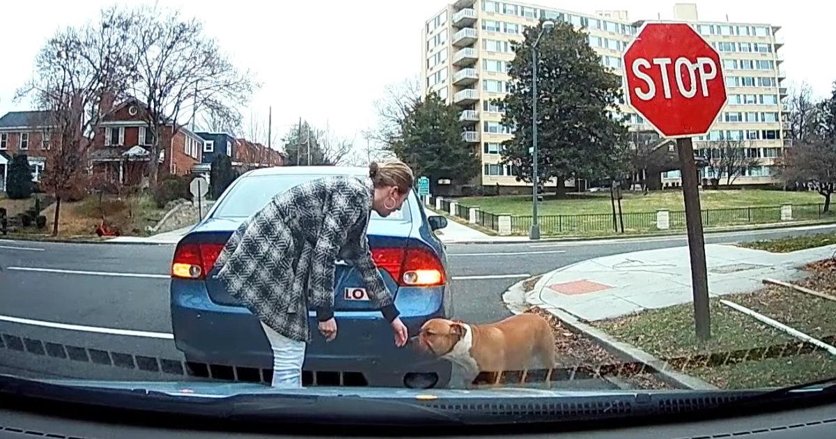 【神対応】路上をさまよっていた犬。飼い主と再会させてあげた2人の見事な連携が話題に!