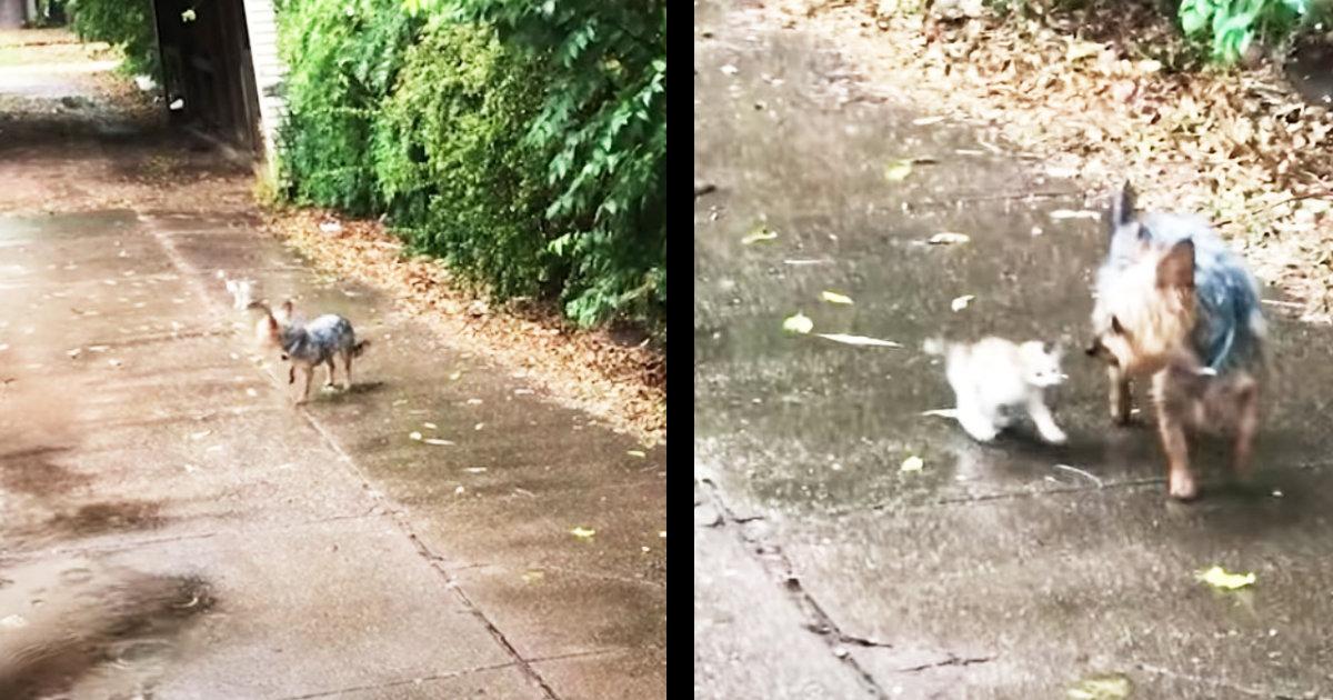散歩から帰ってきた飼い犬が、小さな野良猫の赤ちゃんを助けて連れ帰ってきて話題に!子猫をいたわる愛情深い行動に感動!