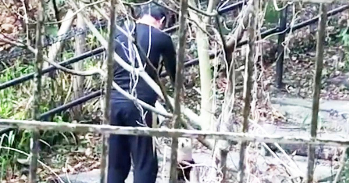 【福岡】目を覆いたくなる、、飼い犬に対してひどすぎる扱いをする高齢男が撮影され物議!その後男は特定され逮捕!