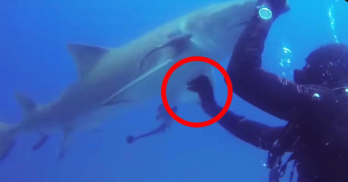 釣り針が刺さり助けを求めてきたサメ。ダイバーが助けると、何度も「ありがとう」と感謝を伝えて懐いてきた!