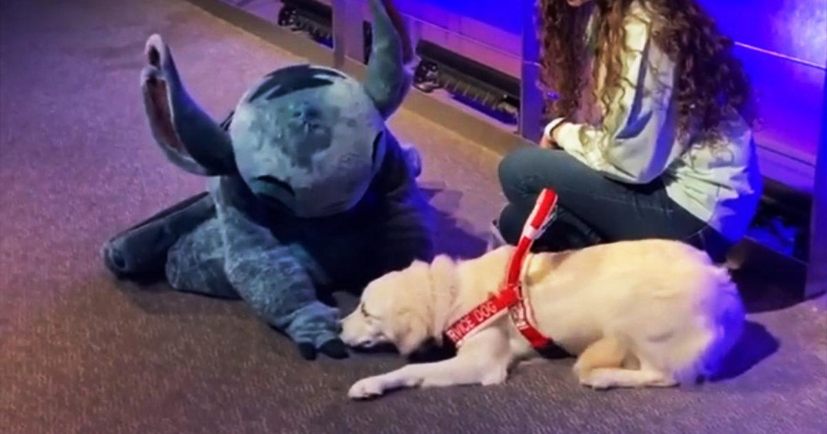 大好きなキャラクターに会った介助犬。いつもはマジメな介助犬らしからぬ行動が可愛すぎると話題に!