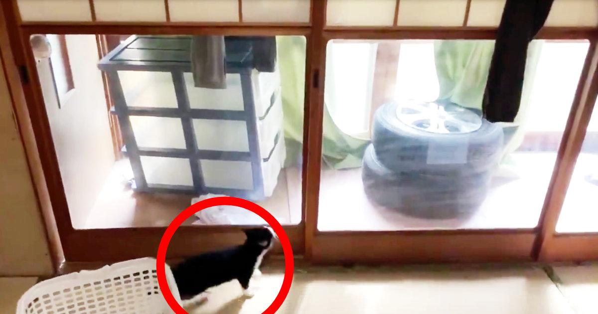 「変なトコの障子が破れている理由を完全に理解しました」猫が思いもよらぬ方法で障子に穴を開ける動画がスゴいと話題に!