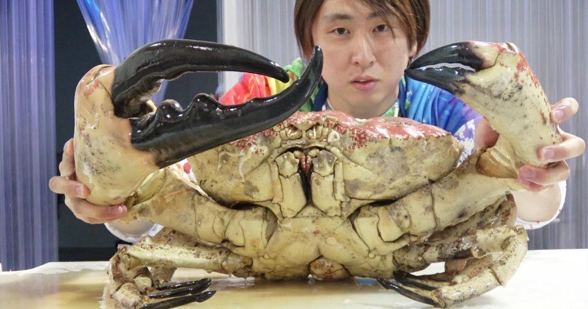 1匹17万円の世界最大のカニを料理して食べる動画が凄すぎる!