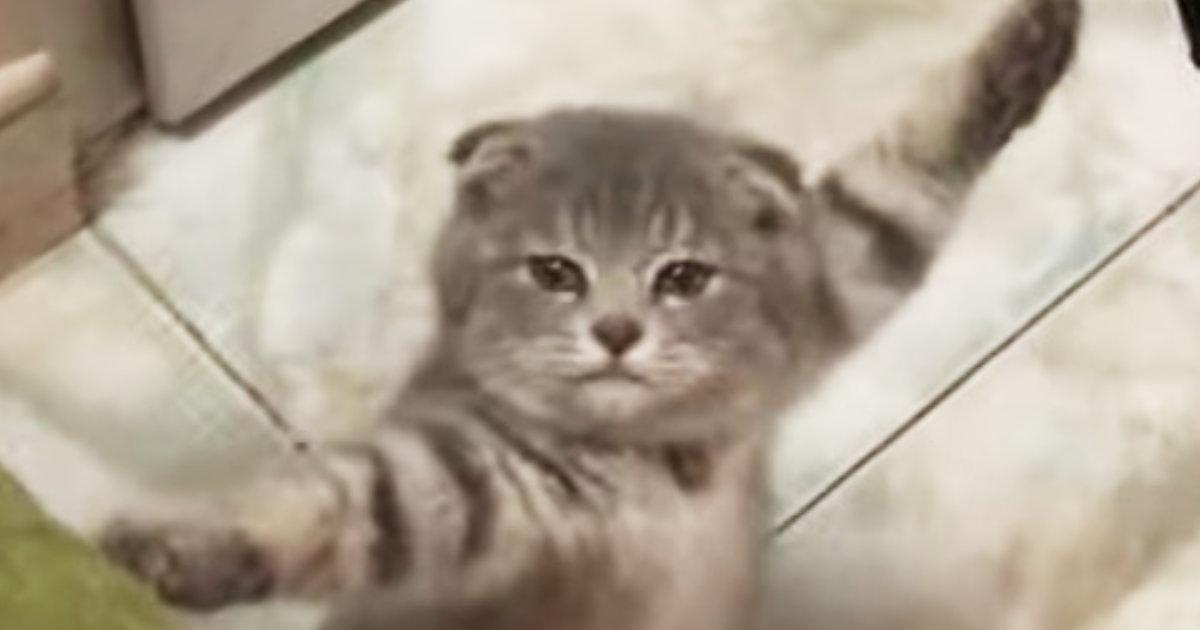 イタズラ大好きな猫が、身動きが取れなくなってスゴイ状態で発見され話題に!