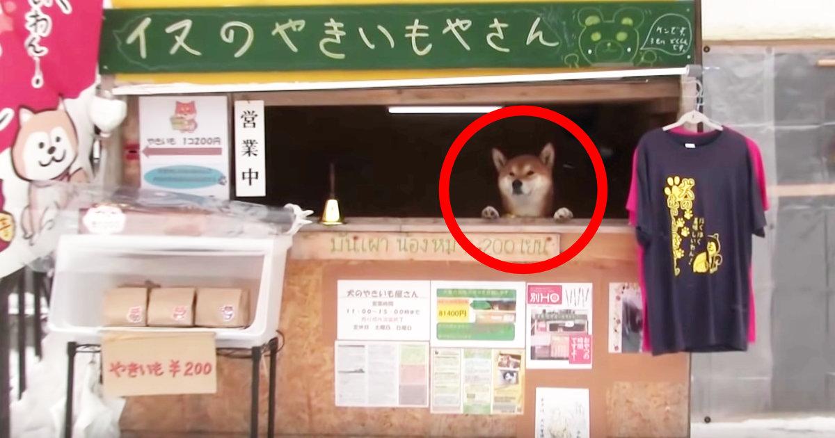 住宅街にある「犬の焼き芋屋さん」が可愛すぎると話題に!収益は他の犬を助けるために使われる!