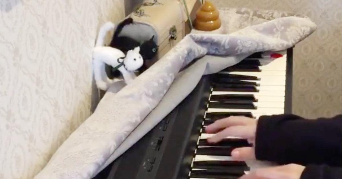 「なんて不謹慎な曲にゃー!」猫踏んじゃったを弾いたら猫様がブチ切れたと話題に!