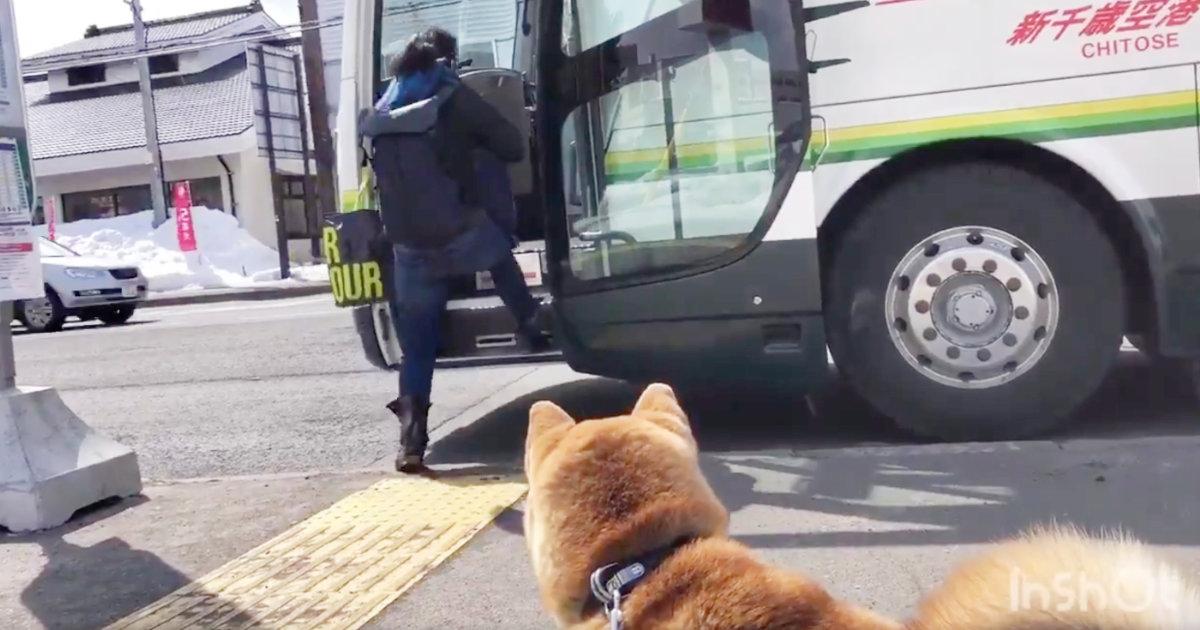 バスで帰る娘を見送りにきた柴犬の行動が切なくて、胸が締め付けられると話題に!